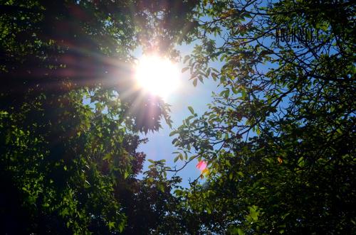 die Sonne strahlt durch ein Blätterdach