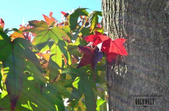 Bunte Blätter am Baum in der Sonne